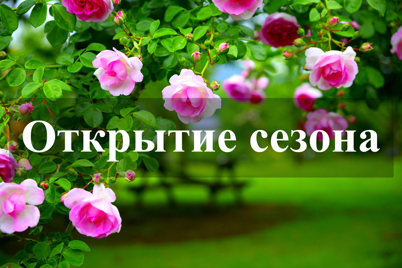 Питомник саженцев, рассады и цветов